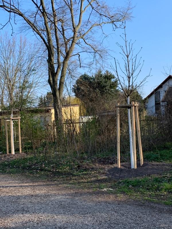 Neue Bäume im Stünzer Park