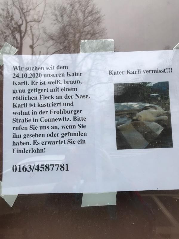 Kater Karl vermisst in Connewitz