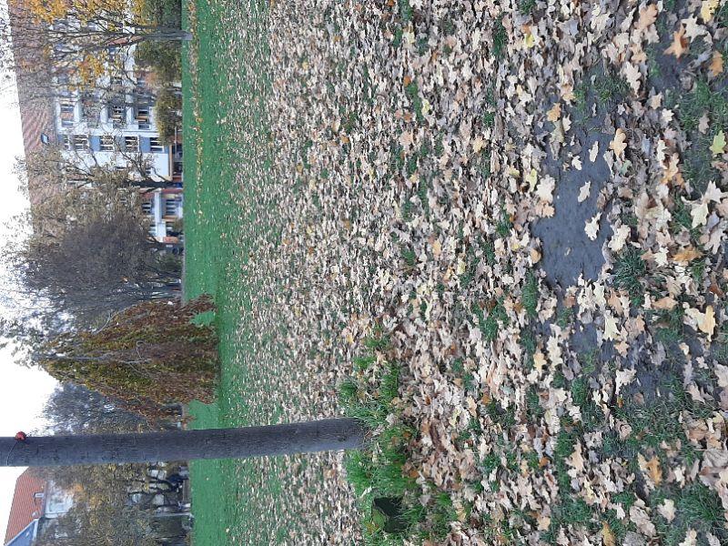 Ein schöner letzter Herbsttag